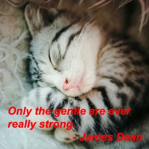 _only_the_gentle_are_ever_really_strong_