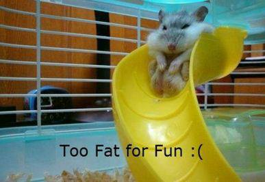 Too Fat for Fun